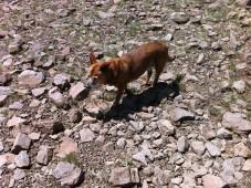 Jax exploring Donner Peak