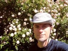 my Cecil Bruner rose