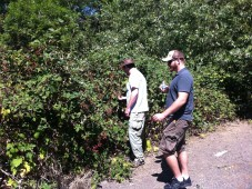 Darryl and John picking blackberries behind Lee's house