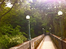 The pedestrian bridge on my walk to the Arboretum, Seattle WA