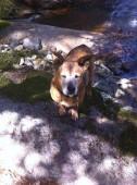 Jax dog on the trail